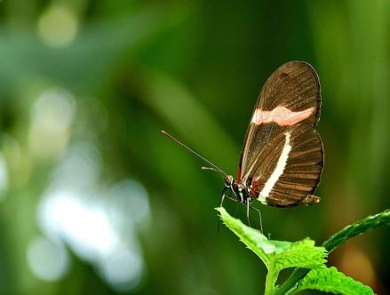 mariposa- 1